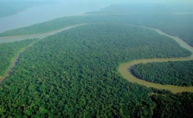 Amazon rainforest photo